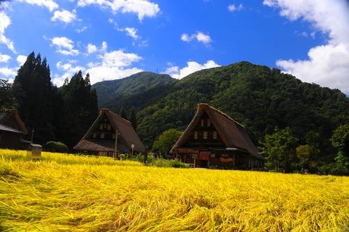 実る稲穂と世界遺産「五箇山」 富山の旅行は西部トラベルへ